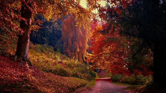 Colorful autumn park wallpaper