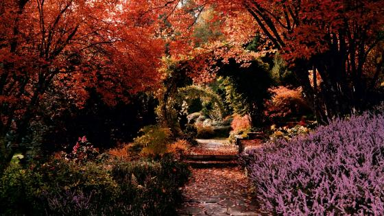 Romantic garden path wallpaper