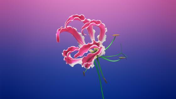 Pink flower digital art wallpaper