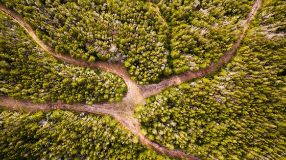 Dirt road junction from above wallpaper