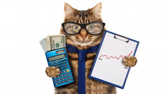 Business cat wallpaper