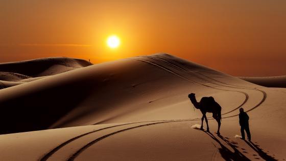 Camel in the desert - Morocco wallpaper