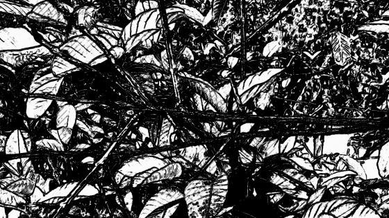 Black & White Leaves wallpaper