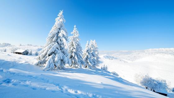 Sunny winter landscape wallpaper