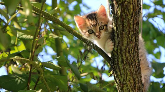 Kitten climbs on a tree wallpaper