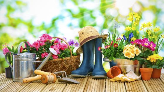 Garden tools wallpaper