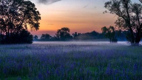 Misty morning wallpaper