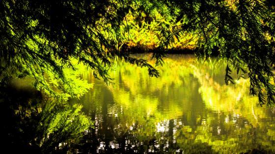 Reflections wallpaper