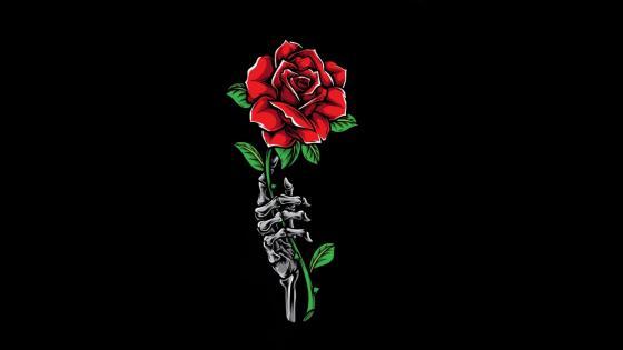 A skeleton gived me a rose wallpaper