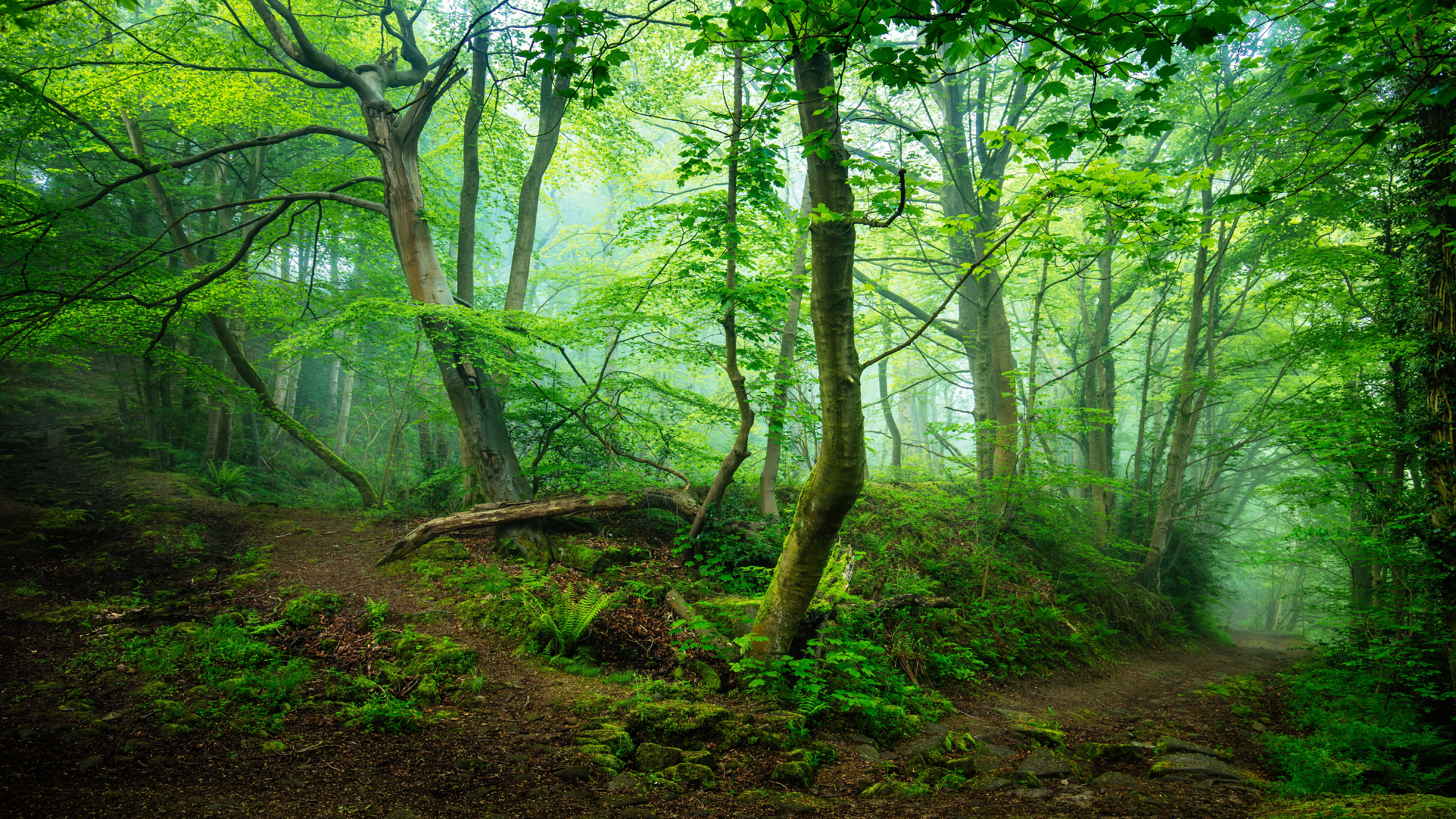 Enchanting forest path wallpaper