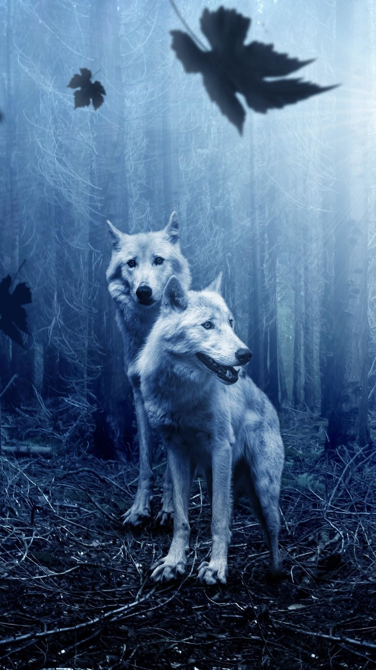 White wolves in the dark forest wallpaper - backiee