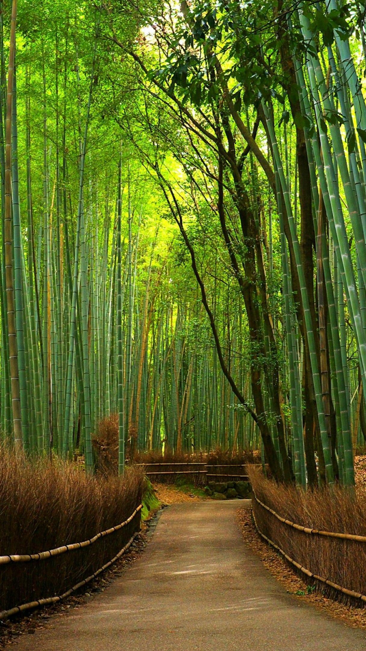 Hutan Bambu 4K UltraHD Wallpaper - backiee - Free Ultra HD wallpaper platform